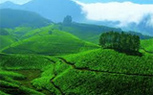 Kerala, Munnar package tour from kolkata