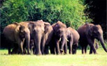 Kerala, Thekkady package tour from kolkata